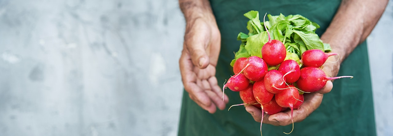 Healthy, sustainably grown radishes