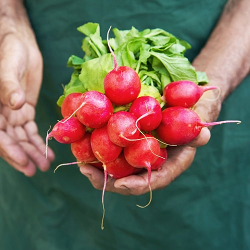 man holding fresh radishes