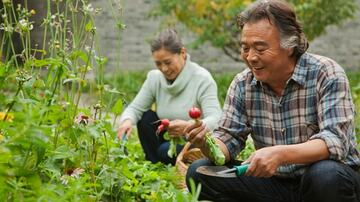 Seniors gardening and harvesting fresh produce from the earth